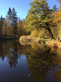 Herbststimmung am Gerzensee. (Bild: Beat von Holzen (Ennetmoos, 1. November 2018))