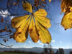 Die letzten farbigen Herbstblätter sind gezählt. (Bild: Paul Siegrist)