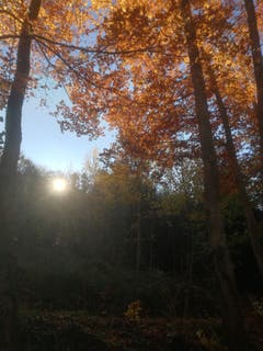 Herbsteindrücke vom Wochenende im Rossbüchel. (Bild: Rahel Nett)