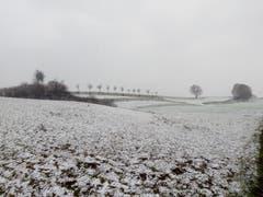Der erste Schnee bei Berg/TG. (Bild: Michael Ziganke)