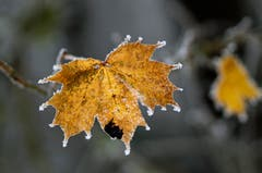Auf dem Belchen zeigt sich der Winter von der schönsten Seite. (Bild: Marianne Schmid (Belchen, 20. November 2018))