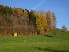Gelbe Farbtupfer in Anwil, Fischingen: Bienenhaus und Lärchen im Herbstkleid. (Bild: Hubert Koch)