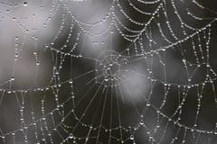 Wenn Spinnen weinen.... (Bild: Yvonne Aldrovandi-Schläpfer)