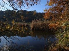 Letzte Herbstfarben beim Weierhof in der Nähe von Littenheid. (Bild: Hubert Koch)