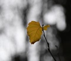 Die November Stille in Hauptwil. (Bild: Yvonne Aldrovandi-Schläpfer)