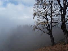 Wunderschöne Herbststimmung mit Nebel. Aufgenommen im Axalpgebiet. (Bild: Bruno Ringgenberg, 3. November 2018)