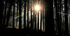 Ein Sonnenstern im dunklen Tannenwald. (Bild: André Egli (Ettiswil, 2. November 2018))
