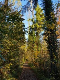 Spaziergang am 1. November an der Thur (Bild: Reto Schlegel)
