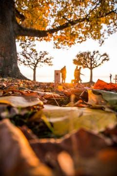 Herbstliche Farben. (Bild: Daniel Hegglin (Zug, 5. November 2018))