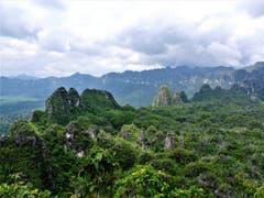 Karstfelsen in der indonesischen Provinz Ostkalimantan. Die nun datierten Höhlenmalereien befinden sich in einer der dortigen Kalksteinhöhlen. (Bild: Pindi Setiawan)