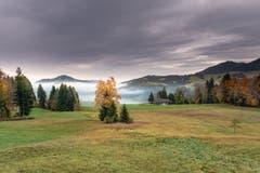 Mystische Herbstfarben auf dem Weg von Urnäsch Richtung Hochalp. (Bild: Luciano Pau)