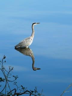 Fischlein duck dich! (Bild: Norbert Wenk)