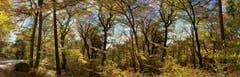 So schön ist der Herbstwald. (Bild: Toni Sieber)