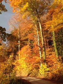 Goldener Herbst im Hätterenwald. (Leserbild: Sibylle Reinert - 6. November 2018)