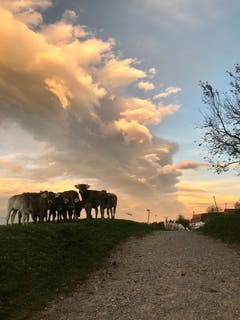 Auf der Weide unter einem imposanten Wolkenband. (Leserbild: Petra Wissmann - 31. Oktober 2018)