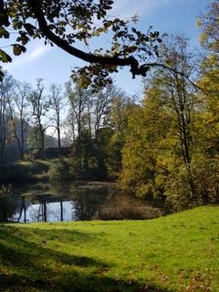 Herbststimmung am Eichweier auf Dreilinden. (Leserbild: Reto Schlegel - 26. Oktober 2018)