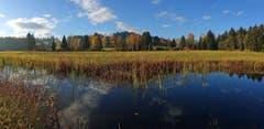 Das Naturschutzgebiet Andwiler Moos gibt viele Motive frei...(Bild: Walter Schmidt)