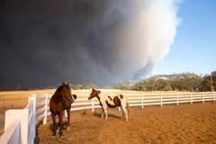 Pferde in Paradise. (EPA/PETER DASILVA)