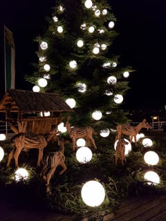 Der Weihnachtsbaum im ungleichen Spiegelbild. (Bild: Oesch Hansjürg)