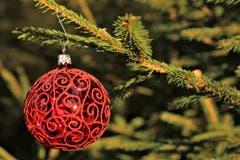 Da baumelt die Weihnachtskugel glänzend rot im Walde. (Bild: Irene Wanner (Schötz, 10. Dezember 2018))