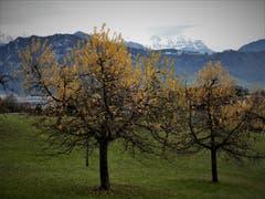 Frühling, Herbst und Winter auf einem Bild; Grüne Matten, bunte Bäume und schneebedeckte Berge. (Bild: Margrith Imhof-Röthlin (Meggen, 9. Dezemeber 2018))