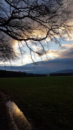 Morgenspaziergang bei Zihlschlacht. (Bild: Marlies Steinemann)