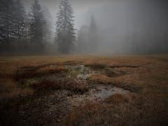 «Nebel heisst umgekehrt leben» — wie schön, dass es in diesem Naturschutzgebiet auf dem Weg vom Gätterlipass zum Urmiberg noch so eine geschützte Oase gibt. (Bild: Margrith Imhof-Röthlin (Gätterlipass, 22. Oktober 2018))