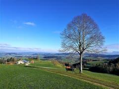 «Auf dem Sitzbänkli neben dem Baum hat man eine wunderbare Aussicht auf die Landschaft.» (Bild: Urs Gutfleisch (Menzberg, 13. Dezember 2018))