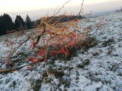 Schauenberg: Rote Punkte im Schnee (Bild: Roland Vogt)