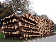 Imposante Holzbeige zwischen Räuchlisberg und Zihlschlacht (Bild: Ursula Huber)