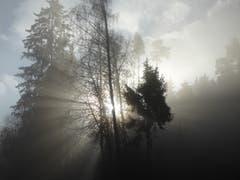 Die Sonne kämpft sich durch den Nebel bei Frauenfeld (Bild: Stephan Lendi)
