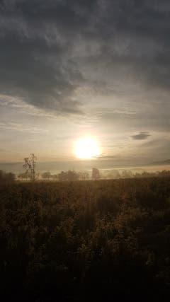 Morgenstund hat Gold im Mund in Zihlschlacht (Bild: Marlies Steinemann)