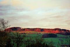 Die Strahlen der untergehenden Sonne reflektieren den Wald vom Stierenberg. (Bild: Josef Habermacher (Rickenbach, 1. Dezember 2018))