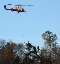 Ein Rotmilan auf Beutesuche beobachtet den Helikopter bei Transportarbeiten auf der Frölichsegg. (Bild: Richard Wiesli)