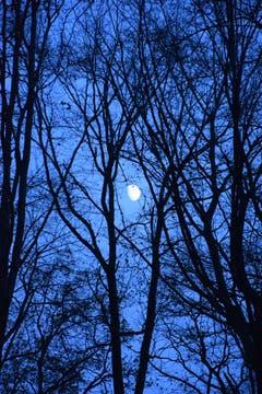Ein Spaziergang im Wald bei Mondschein. (Bild: Oesch Hansjürg)