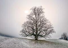 Nebelsonne, aufgenommen bei Urnäsch. (Bild: Wolfgang Reisser)