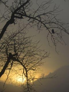 Sonnenuntergang im Nebel, am Dreilindenhang ob St.Gallen. (Bild: Paul Sanwald)