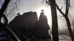 Noch schnell die letzten Sonnenstrahlen geniessen: Steinböcke im Wildpark Peter und Paul. (Bild: Peter Schiltknecht)