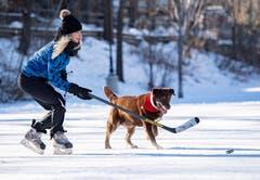 Sportlich: Katy Clover spielt in Begleitung ihres Hundes Mona Eishockey im Central Park in Ottawa. (Bild: Justin Tang/The Canadian Press via AP (Ottawa, 25. Dezember 2018))