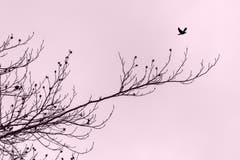 Der frühe Vogel... (Bild: Franziska Hörler)