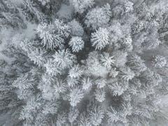 Verschneiter Stösswald in Kriens. (Bild: Pius Amrein, 19. März 2018)