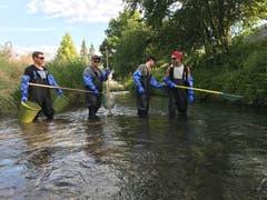 8. Juli: In diesen Tagen beginnen Mitglieder des Fischereivereins Werdenberg damit, Bachläufe wie hier den Giessenbach in Buchs abzufischen. Die hohen Wassertemperaturen und die zunehmend austrocknenden Gewässer machen diese Massnahmen in der Folge während des ganzen Sommers an vielen Bächen und Tümpeln im Werdenberg notwendig. Bild: PD