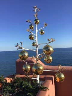 Feliz Navidad: Agave-Weihnachtsbaum, von meinem «Weihnachtsmann» gebastelt. (Bild: Hugo Graber (Torrox Costa, 20. Dezember 2018))