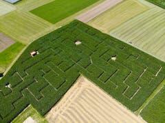 Blick aus der Luft auf das Maislabyrinth in Langrickenbach. (Bild: Donato Caspari)