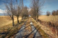 Der Weg zum Bodensee. (Bild: Toni Sieber)