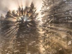 Die Sonnenstrahlen durchbrechen den Nebel und den Tannenwald. (Bild: Matthias Kopp)