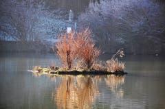 Ein sonniges Plätzchen für die Tiere am Gübsensee. (Bild: Irene Weibel)