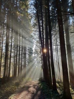 Ein Sonnenblinzler auf dem Sonnenberg in Abtwil. (Bild: Daniel Meuli)