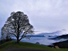 Ein Lindenbaum beim Holderchäppeli mit Wolken, Nebel und Dunst im Tal. (Bild: Urs Gutfleisch, 30. Dezember 2018)