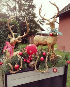 Waiting for Christmas. (Bild: Larisa Gheorghe, Horw, 3. Dezember 2018)